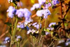 Fleurs d'herbe à l'agriculture de hausse Images stock