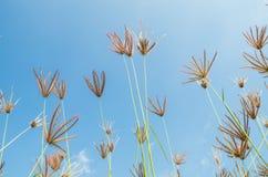 Fleurs d'herbe Photo libre de droits