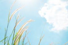 Fleurs d'herbe Image stock