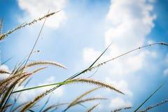 Fleurs d'herbe Photo stock