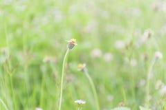 Fleurs d'herbe appropriées au fond photo libre de droits