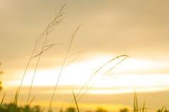 Fleurs d'herbe avec le coucher du soleil Photo libre de droits