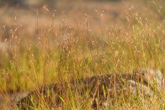 Fleurs d'herbe dans le domaine Photos libres de droits