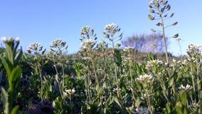 Fleurs d'herbe de nature Photo libre de droits