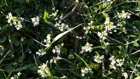 Fleurs d'herbe de nature Photos stock