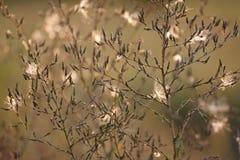 Fleurs d'herbe sèche photo libre de droits