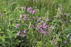 Fleurs d'herbe verte et de pré photos libres de droits