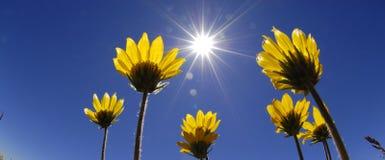 Fleurs d'heure d'été images stock