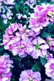 Fleurs d'hiver Images stock