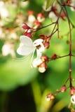 Fleurs d'hiver Image libre de droits