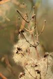 Fleurs d'hiver Image stock