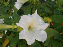 Fleurs d'hiver Photos stock