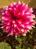 Fleurs d'hiver photo libre de droits