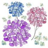Fleurs d'hortensia d'isolement sur le fond blanc Photo libre de droits