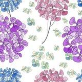 Fleurs d'hortensia d'isolement sur le fond blanc Configuration sans joint Image libre de droits