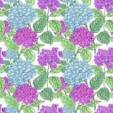 Fleurs d'hortensia sur le fond blanc Conception florale pour des cosmétiques, parfum, produits de soin de beauté Image stock