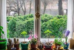Fleurs d'intérieur de fenêtre Photos stock