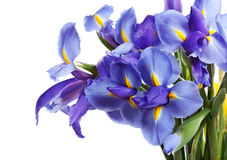 Fleurs d'iris Images libres de droits