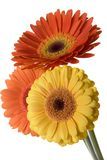 Fleurs d'isolement Photos stock