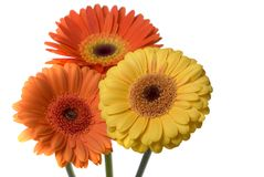Fleurs d'isolement Image libre de droits