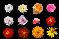 Fleurs d'isolement Images libres de droits