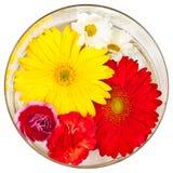 Fleurs d'isolement avec un fond blanc photographie stock