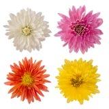 Fleurs d'isolement réglées de 4 Photos stock