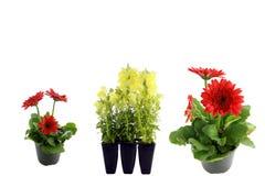 Fleurs d'isolement sur le blanc images stock