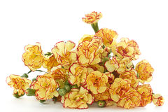 Fleurs d'oeillet Images libres de droits