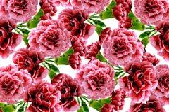 Fleurs d'oeillet de branche Photos stock