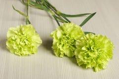 3 fleurs d'oeillet sur le plancher Image libre de droits