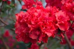 Fleurs d'Orangerie février Image stock
