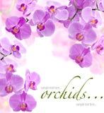 Fleurs d'orchidée Photographie stock libre de droits