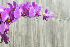 Fleurs d'orchidée Photo stock