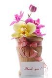 Fleurs d'orchidée avec gratitude photos libres de droits