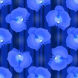 Fleurs d'orchidée bleue Photo stock