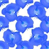 Fleurs d'orchidée bleue Photographie stock
