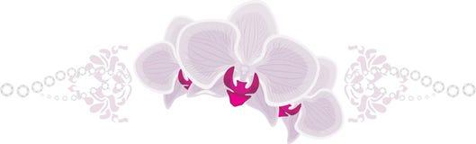 Fleurs d'orchidée d'isolement sur le blanc Images libres de droits