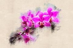 Fleurs d'orchidée sur une branche Image libre de droits