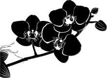 Fleurs d'orchidées Images libres de droits