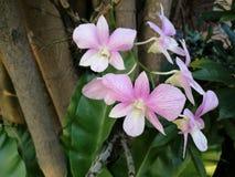 Fleurs d'orchidées Photographie stock libre de droits