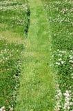 Fleurs d'oxalide petite oseille Image stock