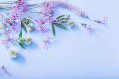 Fleurs d'?t? sur le fond de papier bleu images libres de droits