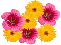 Fleurs d'un jardin image libre de droits