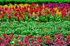 Fleurs d'usine Image libre de droits