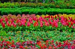 Fleurs d'usine Images libres de droits