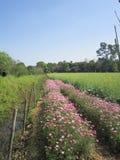 2018 ; fleurs d'usine de Shenzhen de porcelaine au printemps photos stock