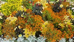 Fleurs dans Ahlbeck, Allemagne Photographie stock libre de droits