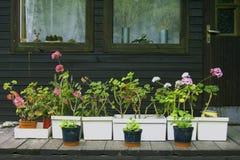 Fleurs dans des bacs Photo libre de droits