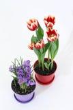 Fleurs dans des bacs Photographie stock libre de droits